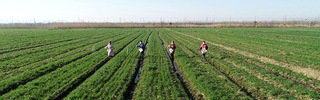 Workers fertilize wheat in the field_Photo by Ma Fengcheng for Xinhua News Agency_fair use.png