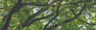 michael-held-unsplash - Tawona (Forest Calls).jpg